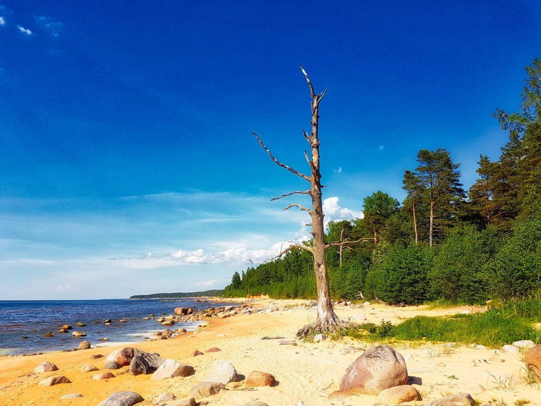 Coastal hiking trails _ Latvia _ Vidzeme Stony Beach _ Escaperies