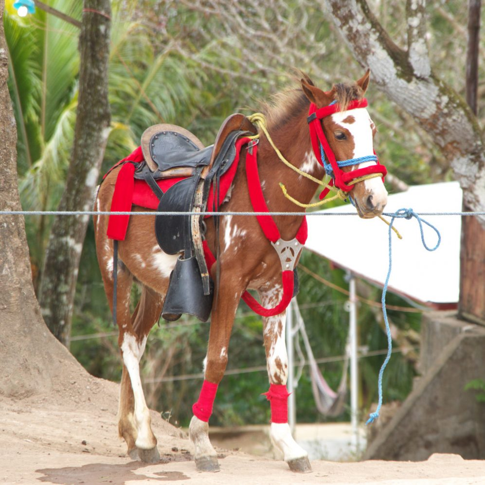 Escape_travel_Nicaragua_horse