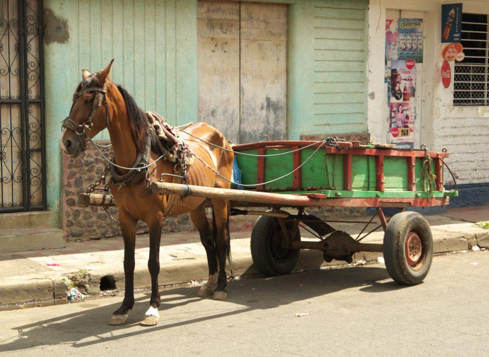 Escape_travel_Nicaragua_horse_02