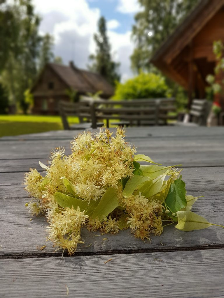 Traveling to Latvia _ Linden blossoms