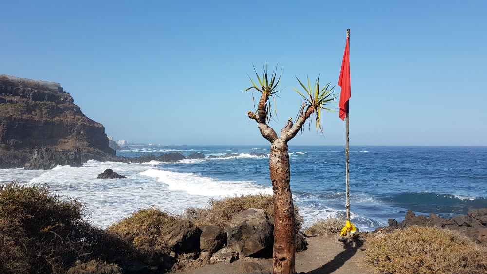 Things to do in Tenerife _ El Ballullo