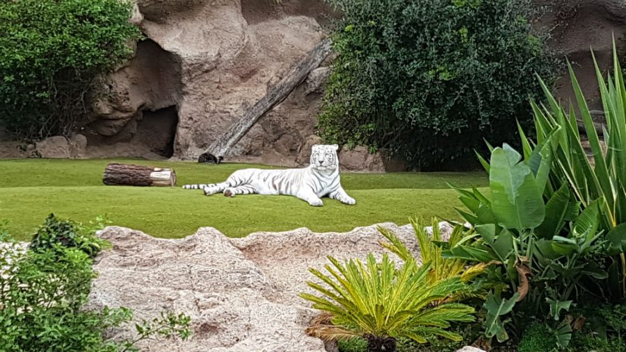 Things to do in Tenerife _ Loro Park