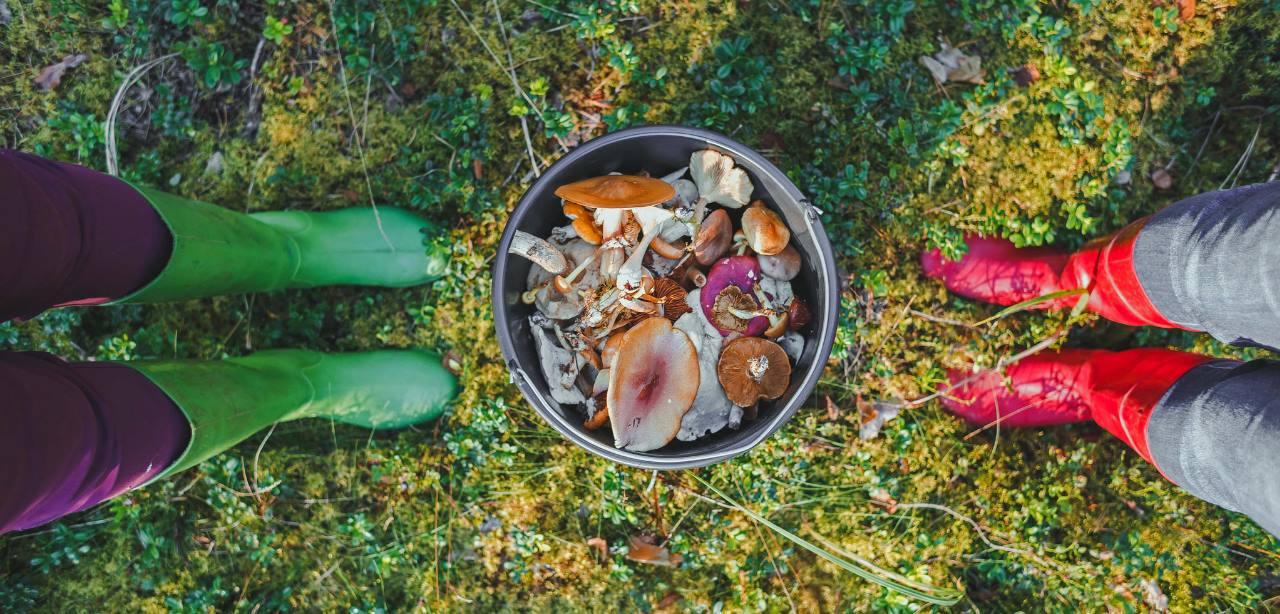 Latvia Mushroom quest Escaperies