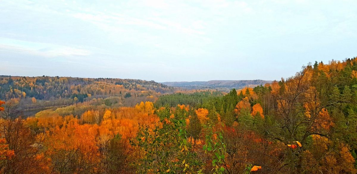 Things to do in Latvia _ Gauja National Park Autumn _ Escaperies