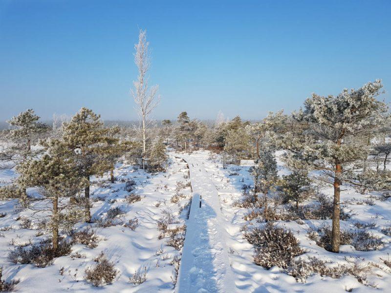 Kemeri National Park_Bog_Frost Trees_Escaperies_i-Da Adventures