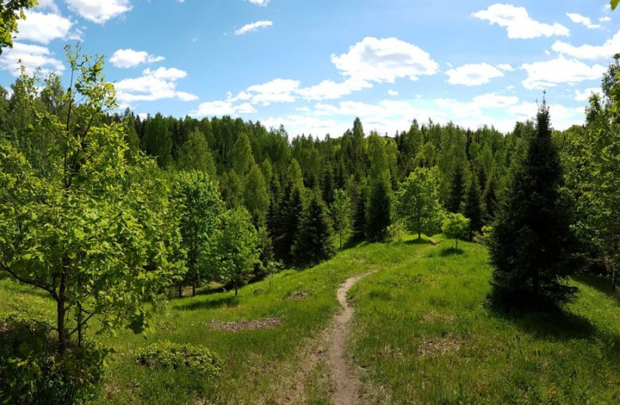 Hiking in Latvia _ Pokaini Forest _ Latvia _ Escaperies