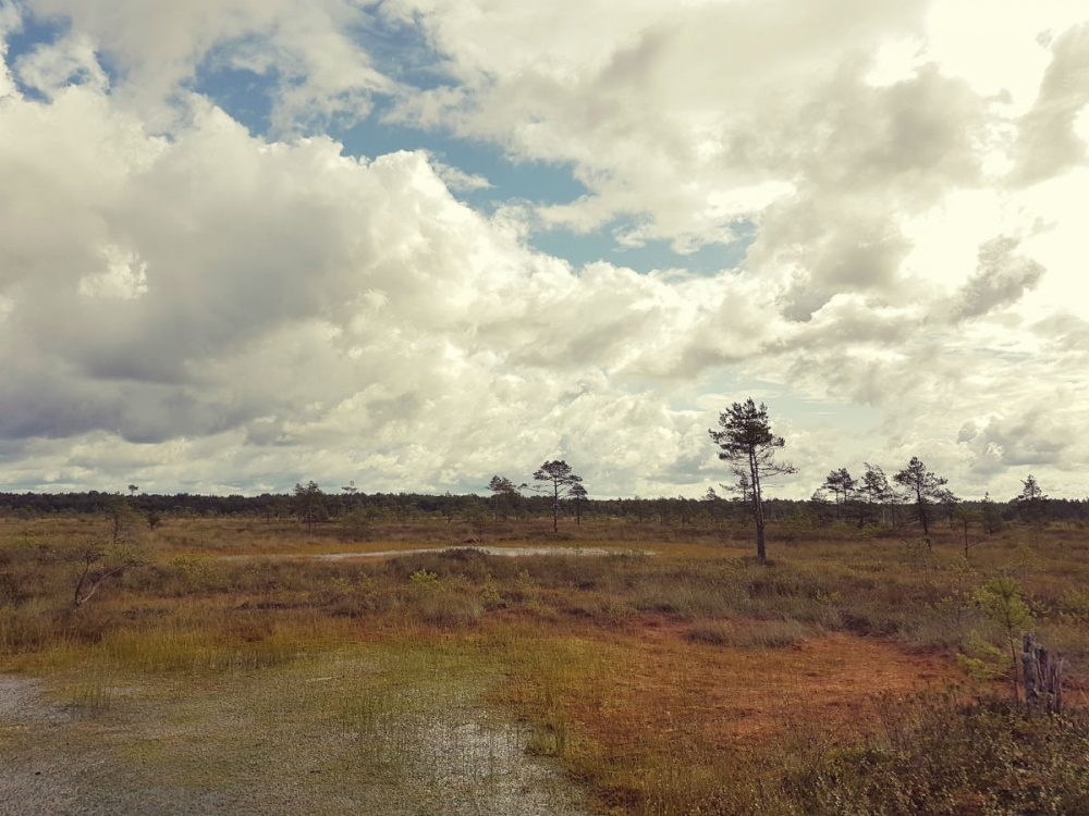 Hiking in Latvia _ Raised bog in Latvia _ Escaperies
