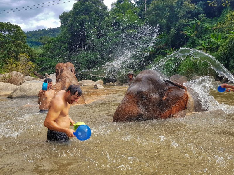 Northern Thailand _ Elephants 02 _ Escaperies